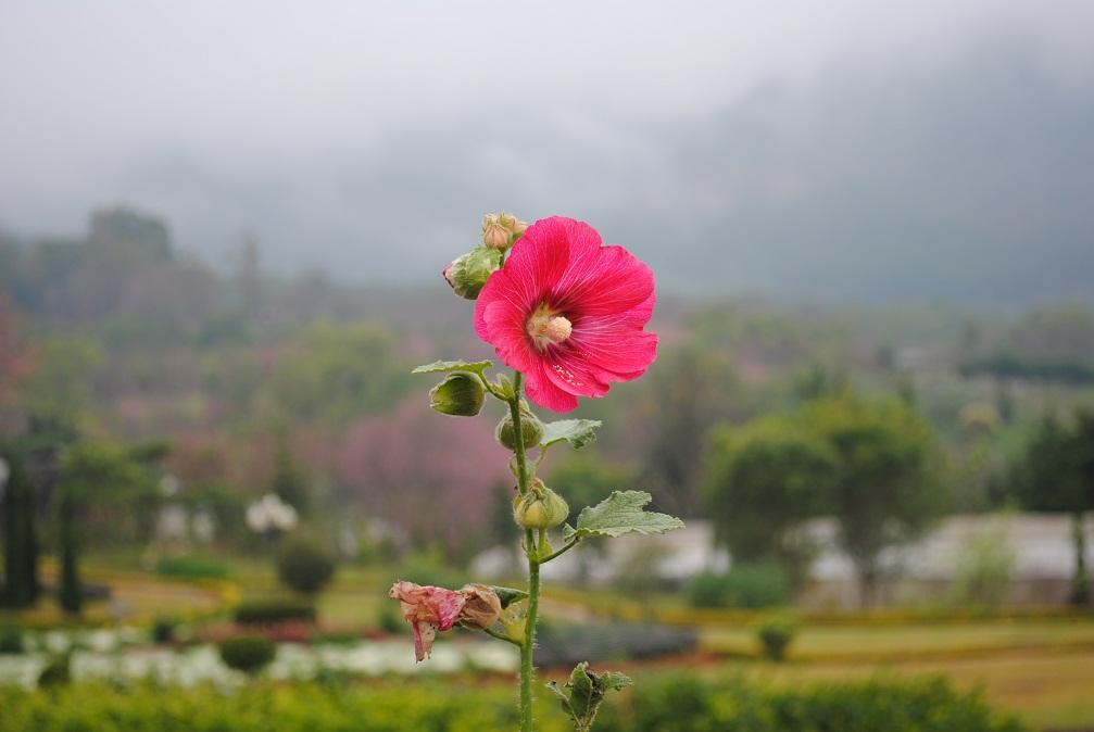 ดอกไม้ยามเช้าเขาว่าสวยงามและสดใส