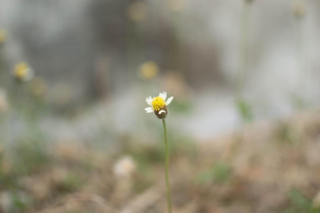 วันนี้เห็นดอกไม่ต้นนี้ก็อกไม่ได้จะนึกถึงเรื่องราวของคนเรา