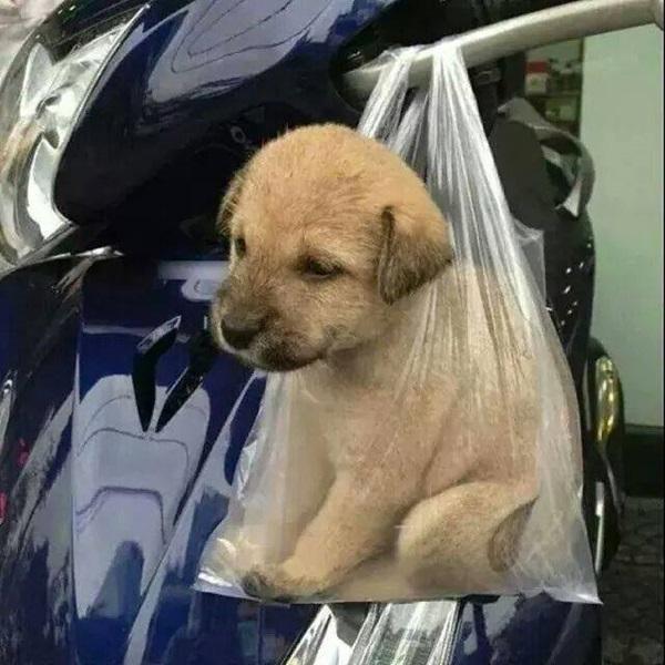 ความรู้สึกของตัวเองเมื่อได้มาเลี้ยงสุนัข