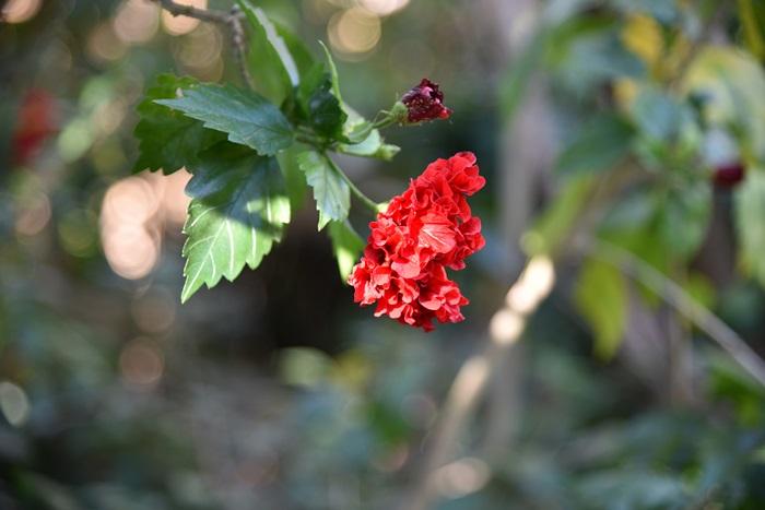 แม้แต่ดอกไม้ยังมีการปรับตัว ทำให้คนเราได้คิด