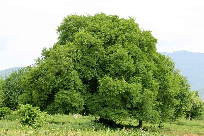 ต้นไม้ใหญ่ให้ความอบอุ่นและปกป้องสัตว์เล็ก ๆ ได้เสมอ