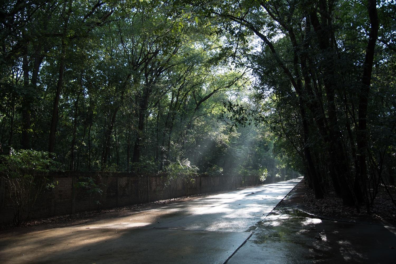 ภาพแห่งความสงบ ณ วัดหนองป่าพง จ.อุบลราชธานี