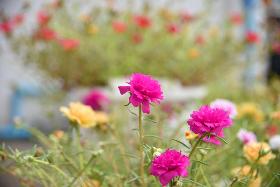 เช้าวันสดใสกับดอกไม้สวย  ๆ